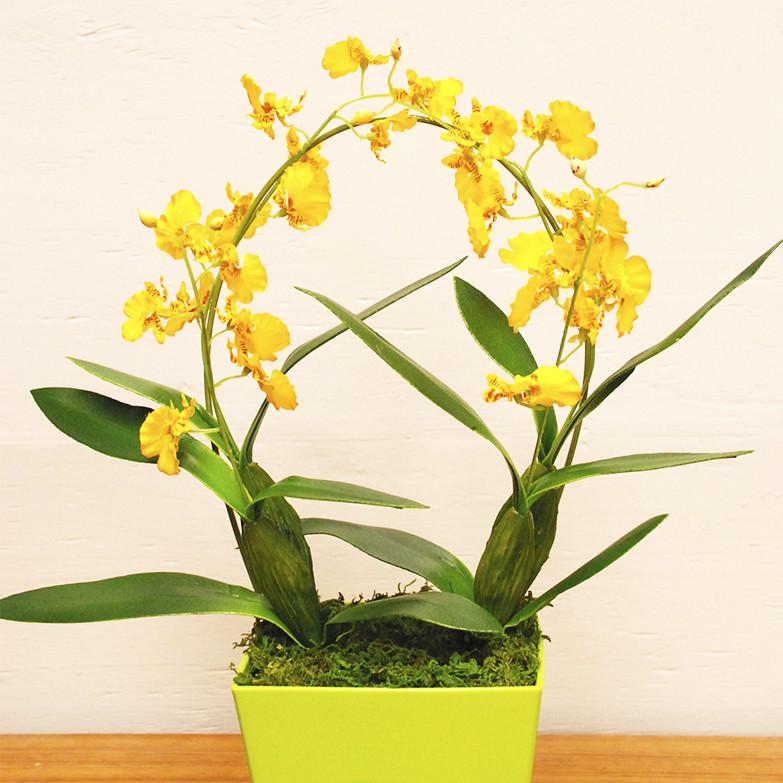 「造花は安っぽい」「買った事がない」という方へ2万点以上の販売実績!「光触媒 フェイクフラワーオンシジューム」  岩や・高知県