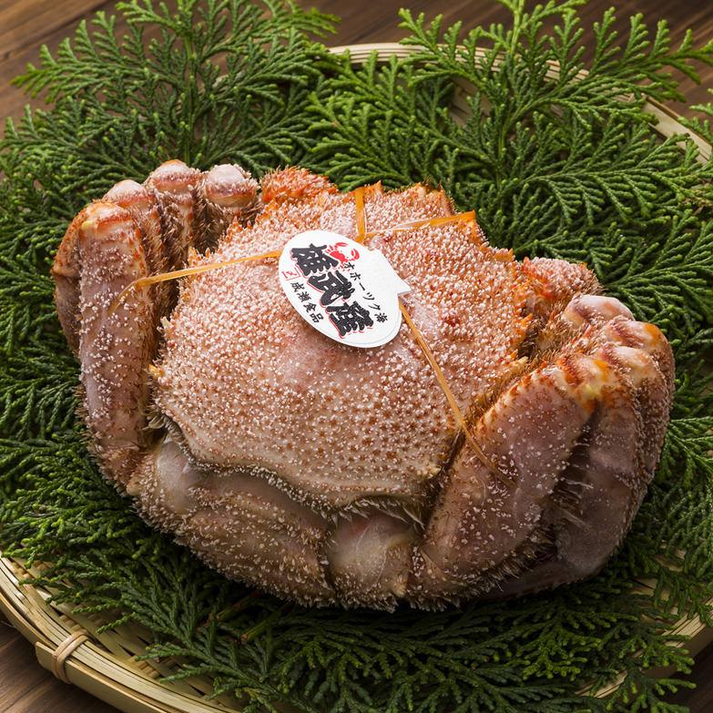 雄武産特上毛蟹(500g) 蟹蔵 成瀬 北海道 希少価値の高い流氷明けの堅毛蟹をオホーツクから直送。