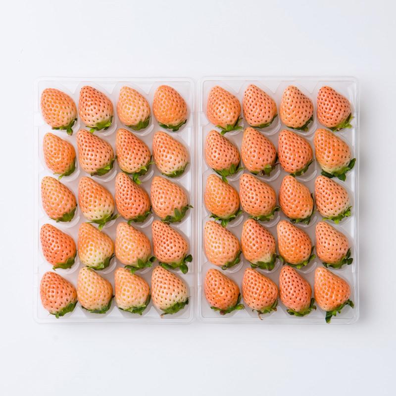 最高品質の白いちご Mサイズ 淡雪 熊本県産〔約20粒×2パック〕