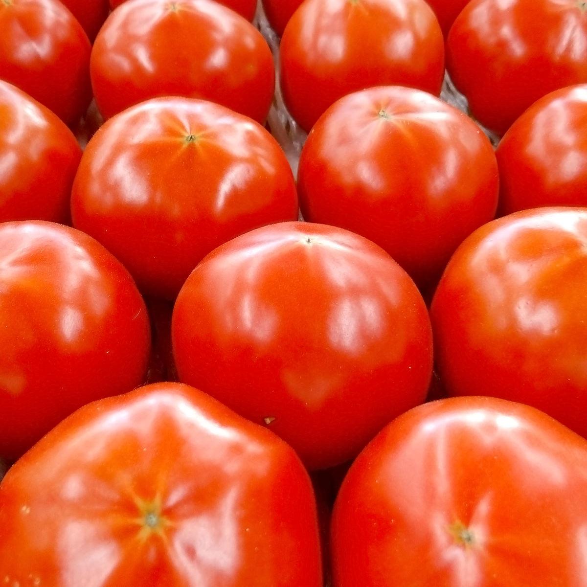 天然の美味しさがぎゅっと凝縮 長崎県産高糖度トマト 西海トマト〔Mサイズ3kg×2箱〕