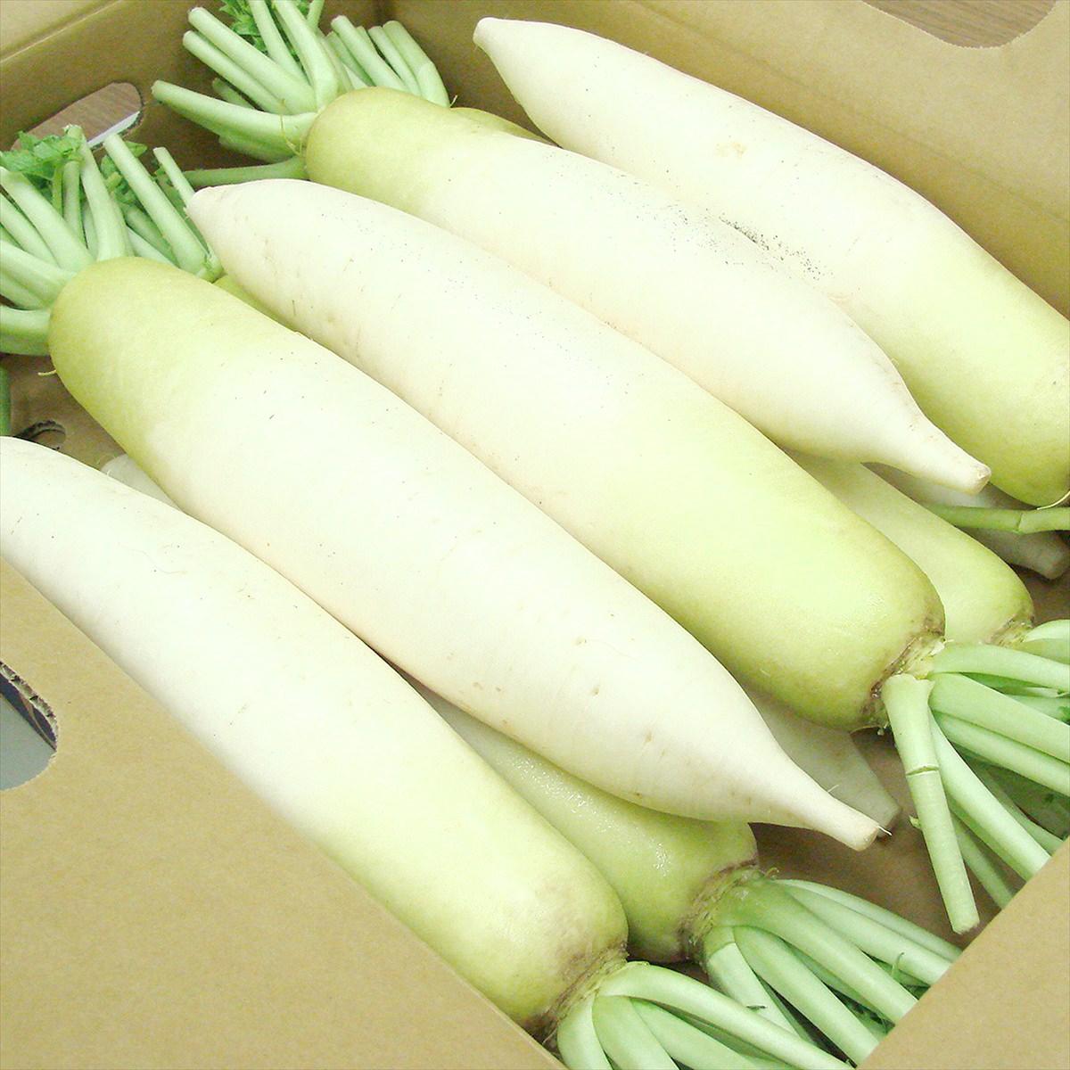 JAめぐみの 岐阜県産 ひるがの高原だいこん Lサイズ 10本〔約1kg×10〕