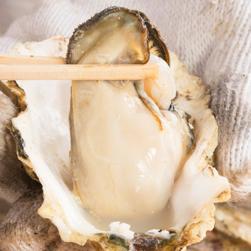 広島県産 業者直送 ぷりっと濃厚 殻付き牡蠣と牡蠣燻製セット〔牡蠣約100粒・燻製10粒・牡蠣ナイフ・軍手〕