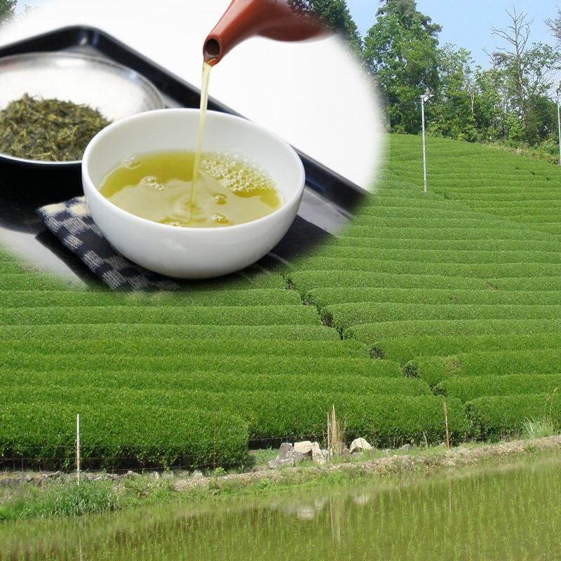 美濃白川茶バラエティーセット〔煎茶・無農薬栽培茶・茎茶・白川産紅茶・濃縮緑茶・美濃白川茶ドリンク〕