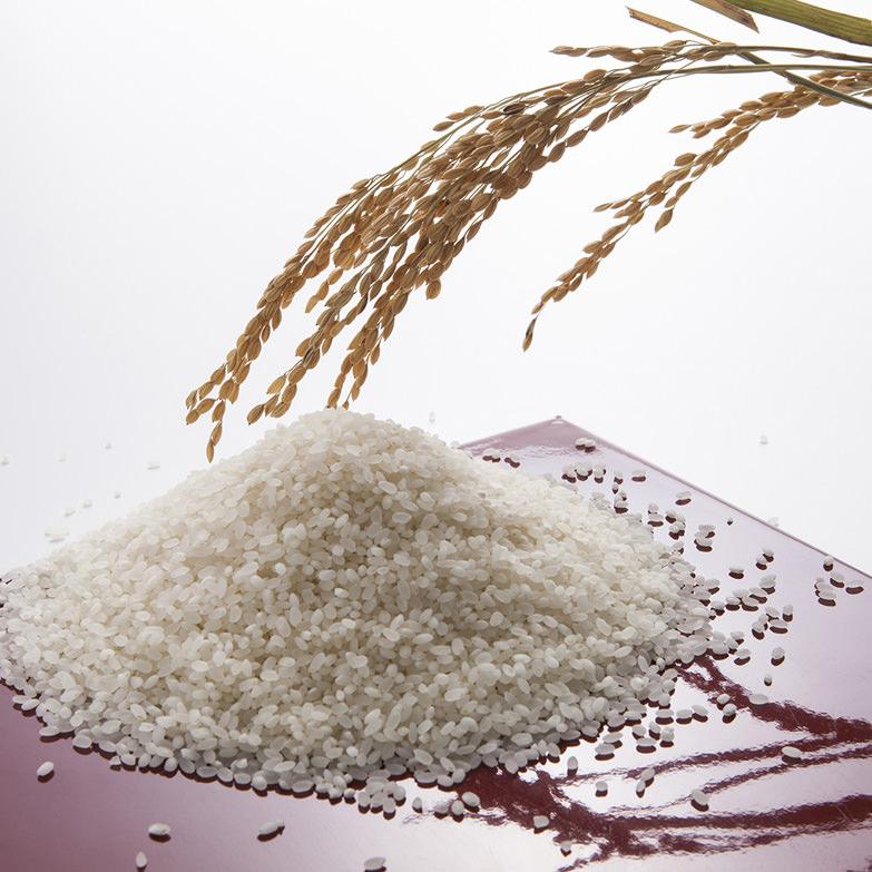 コシヒカリ精米10kg 株式会社エイチアグリ 鳥取県 田植え・田んぼ管理・稲刈り・精米・出荷まで徹底的にこだわった米