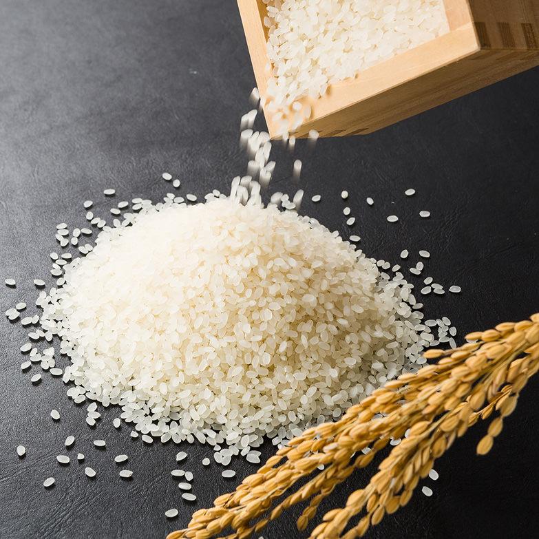 はでかけコシヒカリ5kg×2 嶋田米穀株式会社 鳥取県 五つ星お米マイスターが選んだ、太陽の恵みをたっぷり受けた「はでかけ米」