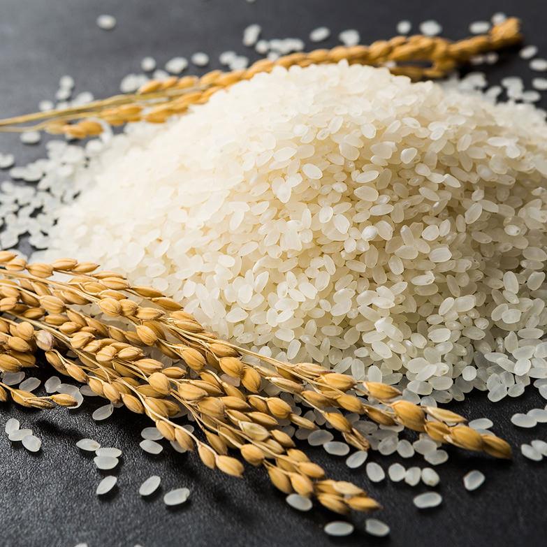 無洗米コシヒカリ5kg×2 嶋田米穀株式会社 鳥取県 五つ星お米マイスターが選んだ、節水・エコ・簡単便利な無洗米コシヒカリ