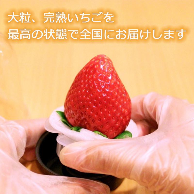 特大完熟イチゴ〔12個(1粒約45g〜60g)〕