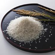 近江米コシヒカリ10kg 株式会社パールライス滋賀 滋賀県 四方の山々から流れ込むミネラル豊富な水で育った日本を代表する品種。