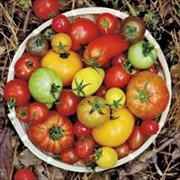 プティリサ・ジュエルボックス ミニトマト 詰め合わせ 〔700g〕 トマト 野菜 高知 おかざき農園
