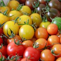 リサ・ミニトマト ご家庭用カラーミニトマト アソート 〔約1kg〕 トマト 野菜 高知 おかざき農園