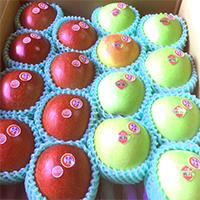 完熟りんご 群馬名月・コスモふじ詰め合せ(中玉サイズ8〜9玉)特選