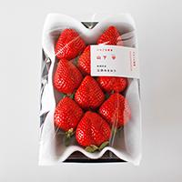 減農薬・完熟いちご 贈答用 500g以上(250g×2パック)栽培期間中 農薬不使用