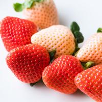 ギフト箱入り 紅白いちご ミックス ゆうべに 淡雪 熊本県産〔9〜15粒×2パック〕