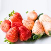 ギフト箱入り 紅白いちご ゆうべに 淡雪 熊本県産〔9〜15粒×各1パック〕