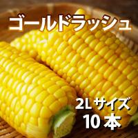 オビプロファーム 北海道十勝産とうもろこし ゴールドラッシュ 2Lサイズ 10本〔約3.8kg〕