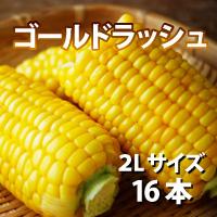 オビプロファーム 北海道十勝産とうもろこし ゴールドラッシュ 2Lサイズ 16本〔約6kg〕