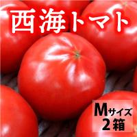 サラダファイブ 天然の美味しさがぎゅっと凝縮 長崎県産高糖度トマト 西海トマト〔Mサイズ3kg×2箱〕