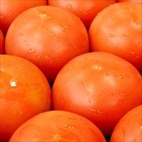 JA全農岐阜 岐阜県産 かしも桃太郎トマト 約4kg〔約18〜22玉〕
