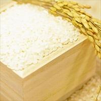 白神山水金陵米 〔5kg〕 米 秋田 こまち食品工房