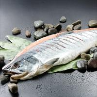 新巻鮭姿切れ目入り 〔1.6kg〕 鮭 冷凍 北海道 江戸屋