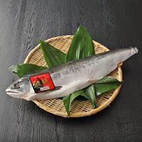 知床産鮭児生冷凍半身〔半身約900g〜1000g×1枚〕