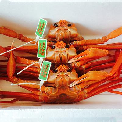 みずみずしくジューシーな味わい 紅ズワイガニ 生きたまま届く!石川県産紅ズワイガニ3杯セット | 石川県 ナカガワ
