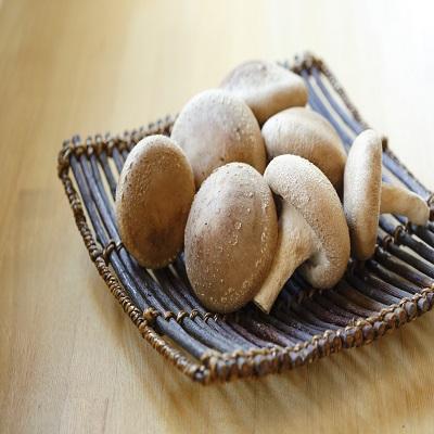 肉厚生椎茸セット 秀15枚入り 農事組合法人サンエスファーム 長崎県 自然豊かな南島原で育った安全・安心のこだわり椎茸。