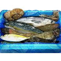 気仙沼 漁師さんの鮮魚セット〔約3〜5kg※漁獲種類により異なります〕