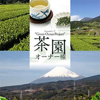 有機茶園オーナー権【Green Ocean Project】富士茶園〔季節の茶葉100g以上×4〕