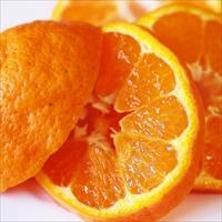 フクチャンFARM 高知県産 おひさまオレンジ 甘いみかん 爽やか ぽんかん ご家庭用〔10kg〕