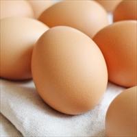 人生これか卵 6H 〔6個入〕 卵 常温 愛媛 イヨエッグ