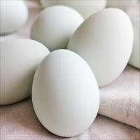 インカの卵 20個 〔20個入〕 卵 常温 愛媛 イヨエッグ