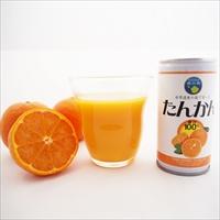 屋久島たんかんジュース 果汁100%ストレート 30本 〔190g×30〕 ジュース ドリンク 鹿児島 屋久屋